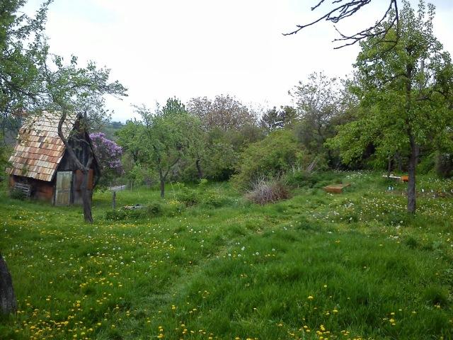 A kert látképe a ház sarkától pont a sárgyűjtő felé nézve.